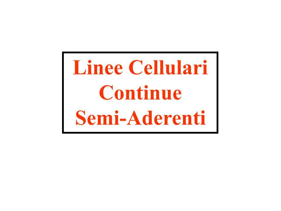 Linee Cellulari Continue Semi-Aderenti