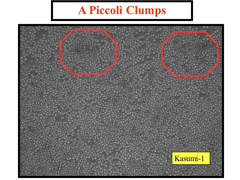 A Piccoli Clumps Kasumi-1