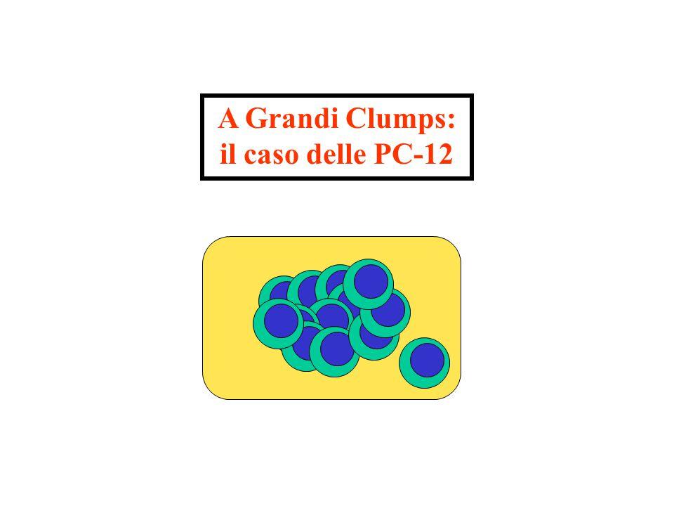 A Grandi Clumps: il caso delle PC-12