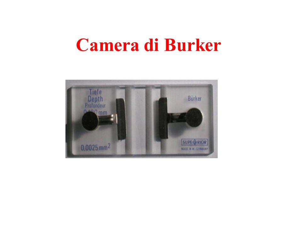Camera di Burker