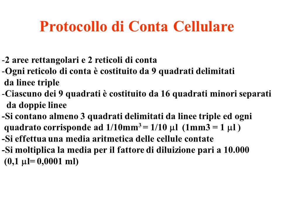 Protocollo di Conta Cellulare
