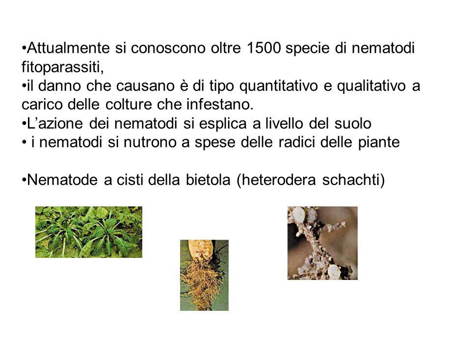 Attualmente si conoscono oltre 1500 specie di nematodi fitoparassiti,