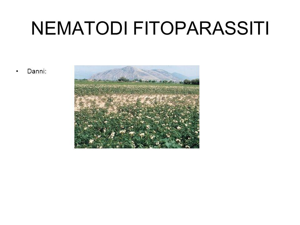 NEMATODI FITOPARASSITI