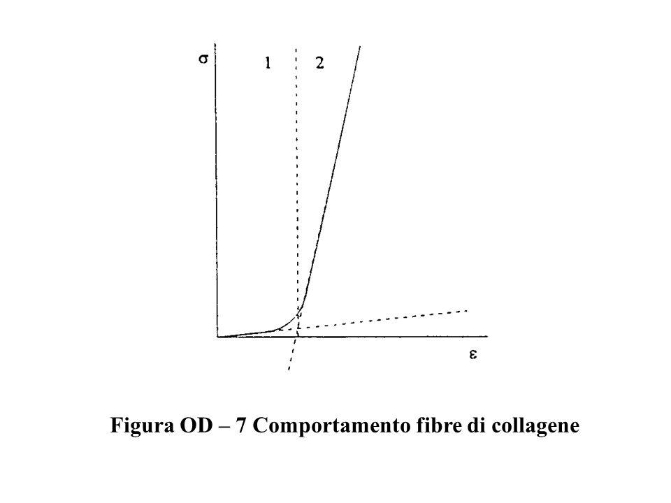 Figura OD – 7 Comportamento fibre di collagene