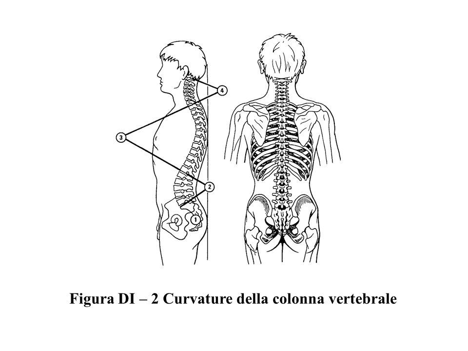 Figura DI – 2 Curvature della colonna vertebrale