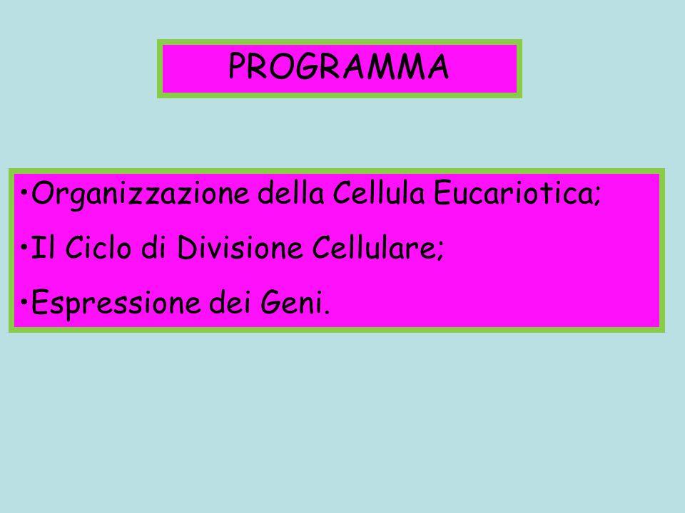 PROGRAMMA Organizzazione della Cellula Eucariotica;