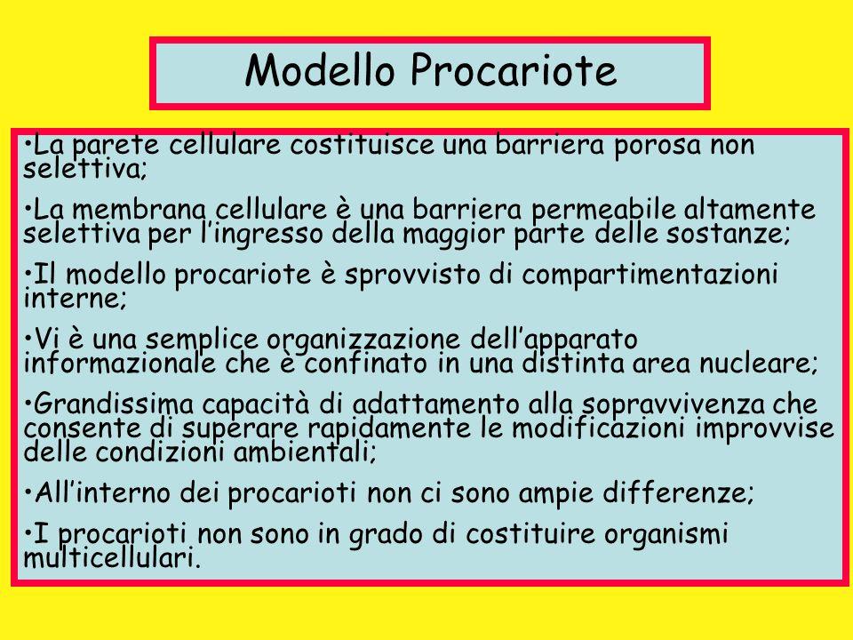 Modello Procariote La parete cellulare costituisce una barriera porosa non selettiva;