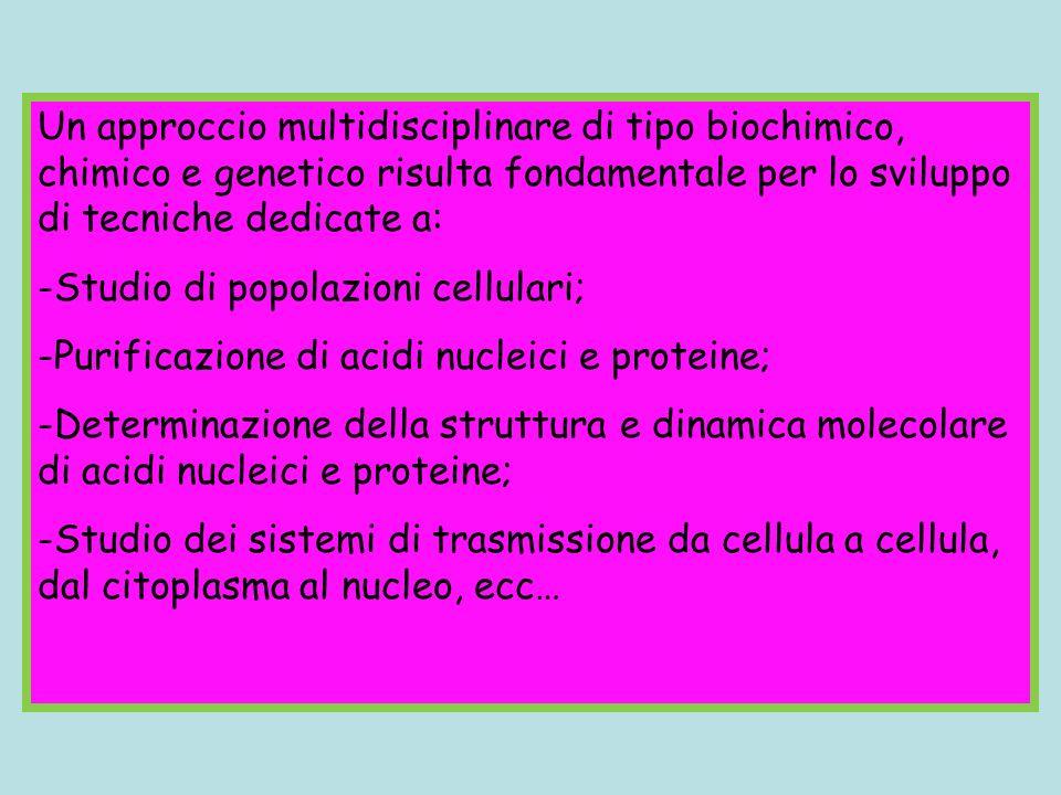 Un approccio multidisciplinare di tipo biochimico, chimico e genetico risulta fondamentale per lo sviluppo di tecniche dedicate a: