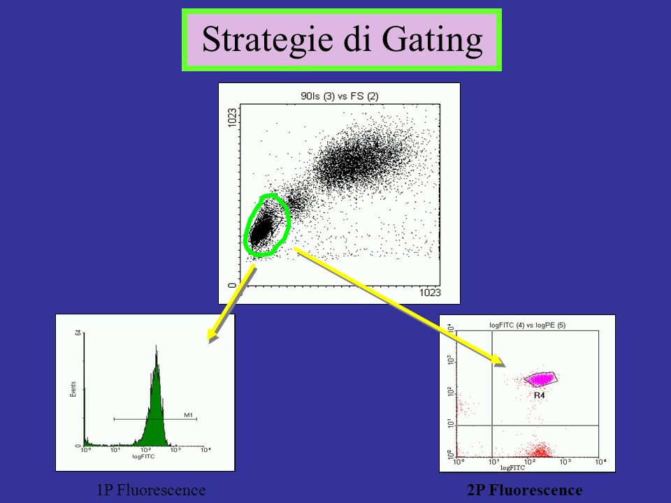 Strategie di Gating 1P Fluorescence 2P Fluorescence FALS Scatter