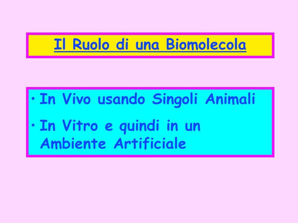 Il Ruolo di una Biomolecola