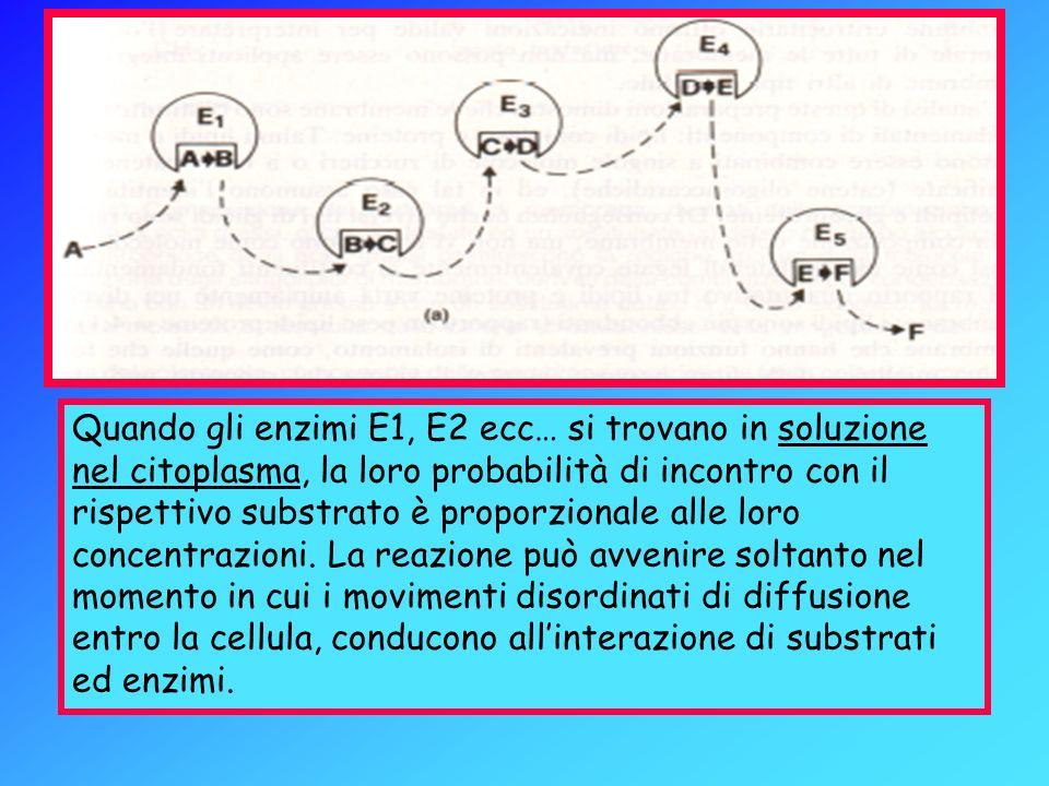 Quando gli enzimi E1, E2 ecc… si trovano in soluzione nel citoplasma, la loro probabilità di incontro con il rispettivo substrato è proporzionale alle loro concentrazioni.