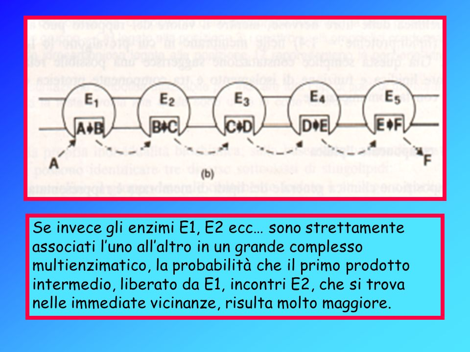 Se invece gli enzimi E1, E2 ecc… sono strettamente associati l'uno all'altro in un grande complesso multienzimatico, la probabilità che il primo prodotto intermedio, liberato da E1, incontri E2, che si trova nelle immediate vicinanze, risulta molto maggiore.