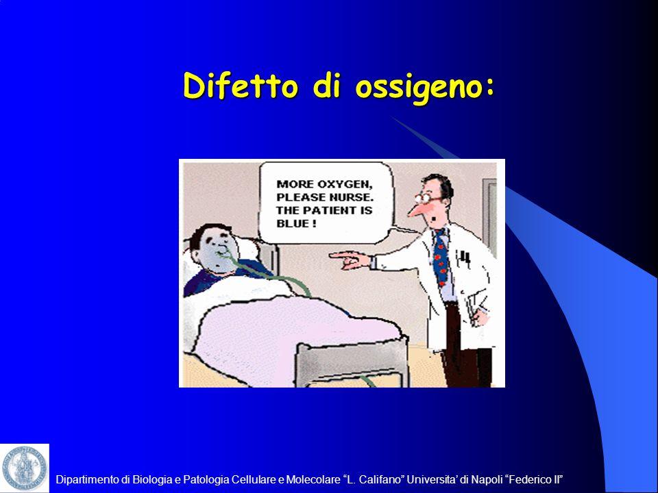 Difetto di ossigeno: Dipartimento di Biologia e Patologia Cellulare e Molecolare L.