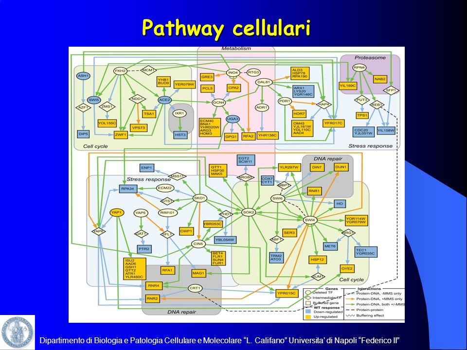 Pathway cellulari Dipartimento di Biologia e Patologia Cellulare e Molecolare L.