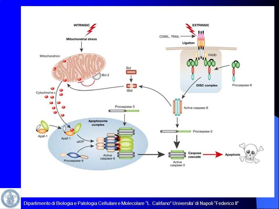 Dipartimento di Biologia e Patologia Cellulare e Molecolare L