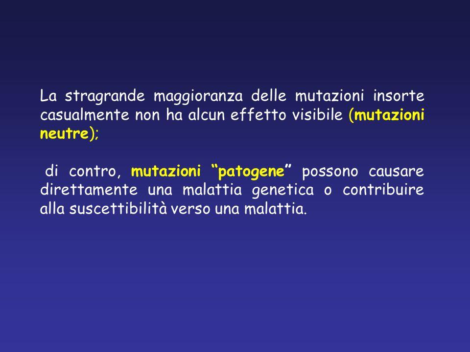 La stragrande maggioranza delle mutazioni insorte casualmente non ha alcun effetto visibile (mutazioni neutre);