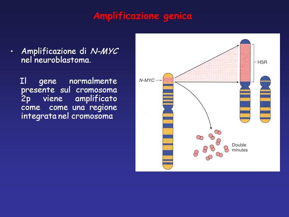 Amplificazione genica