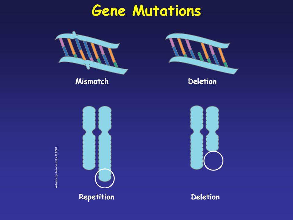 Gene Mutations Mismatch Deletion Repetition Deletion