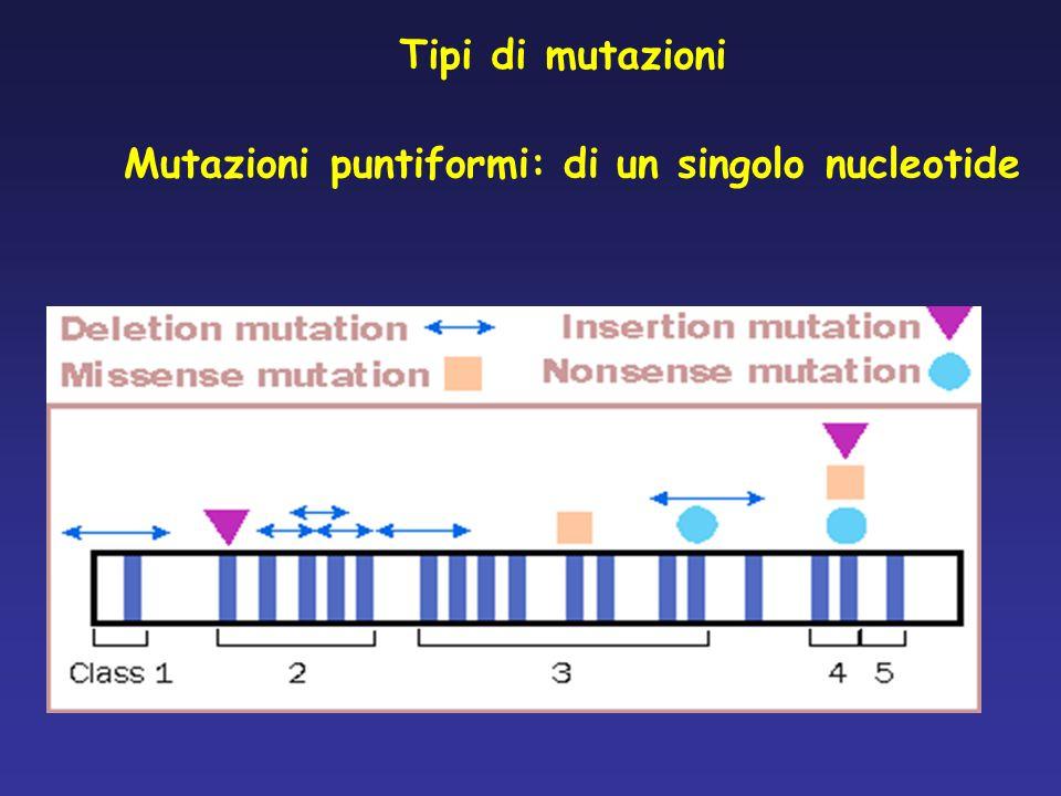 Tipi di mutazioni Mutazioni puntiformi: di un singolo nucleotide