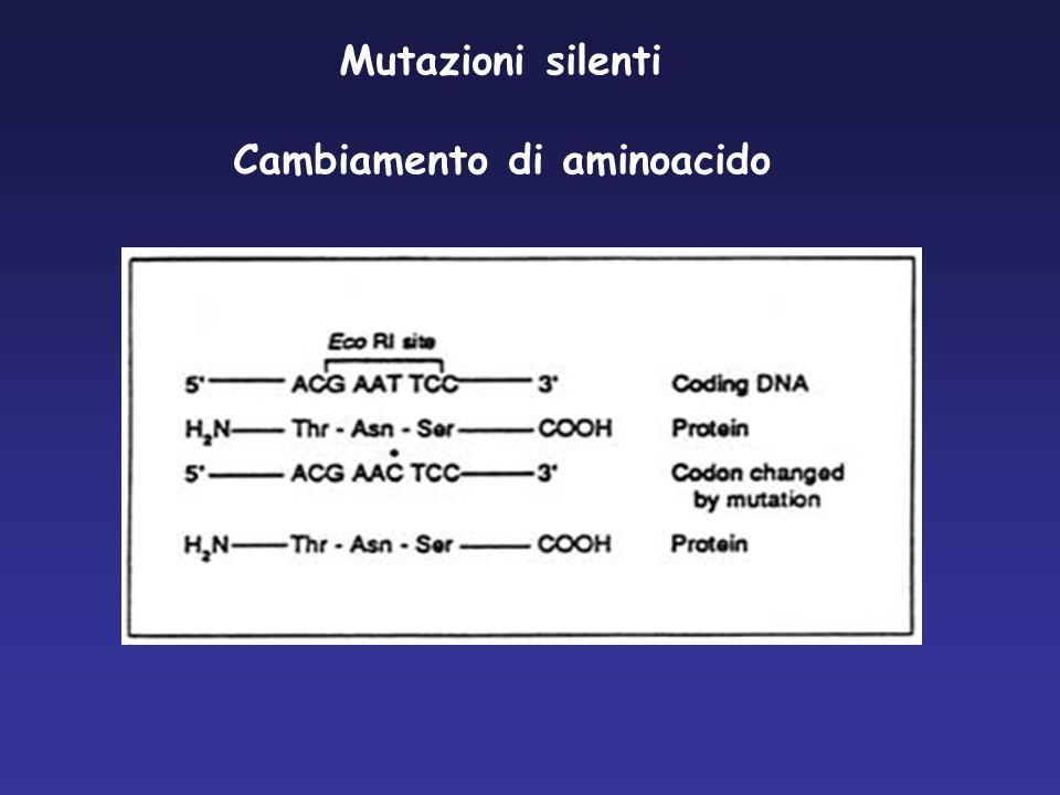 Cambiamento di aminoacido