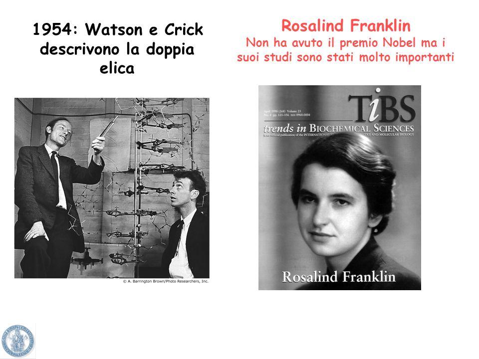 1954: Watson e Crick descrivono la doppia elica