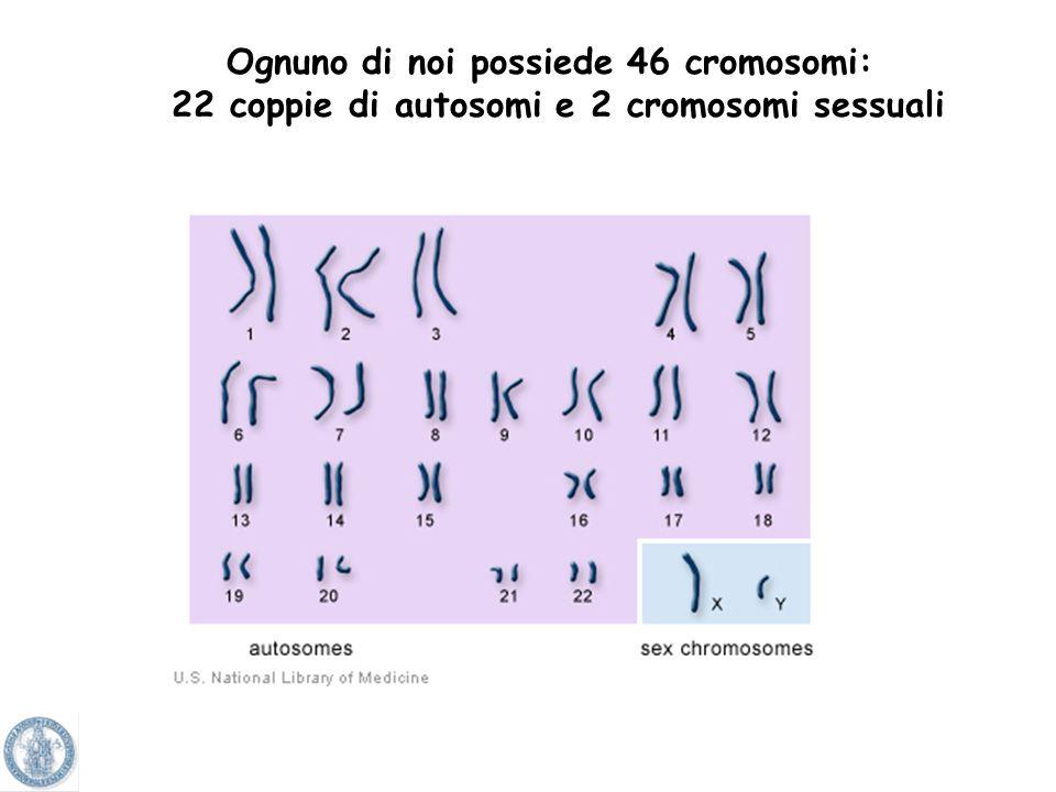 Ognuno di noi possiede 46 cromosomi: