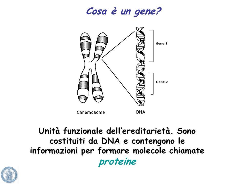 Cosa è un gene. Unità funzionale dell'ereditarietà.