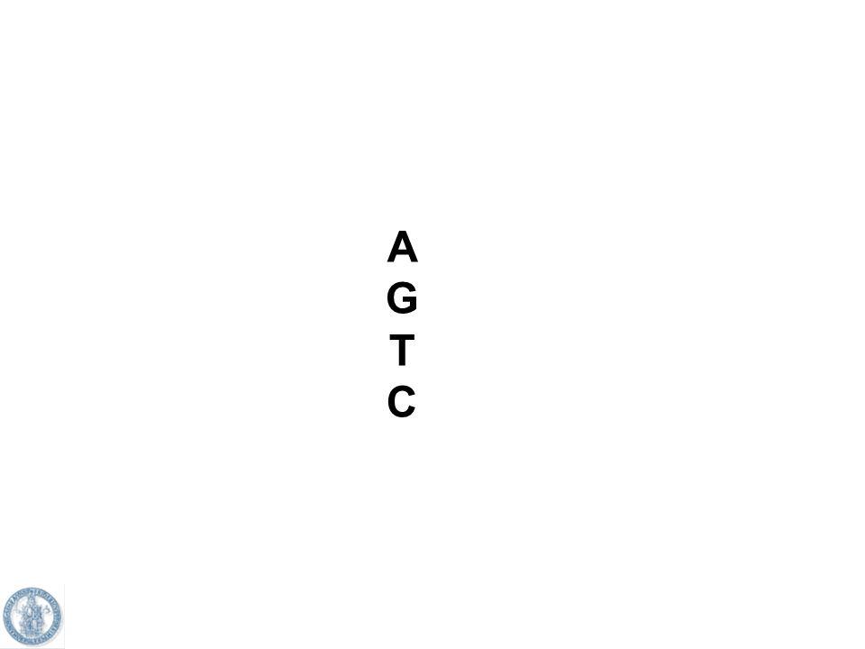 A G T C