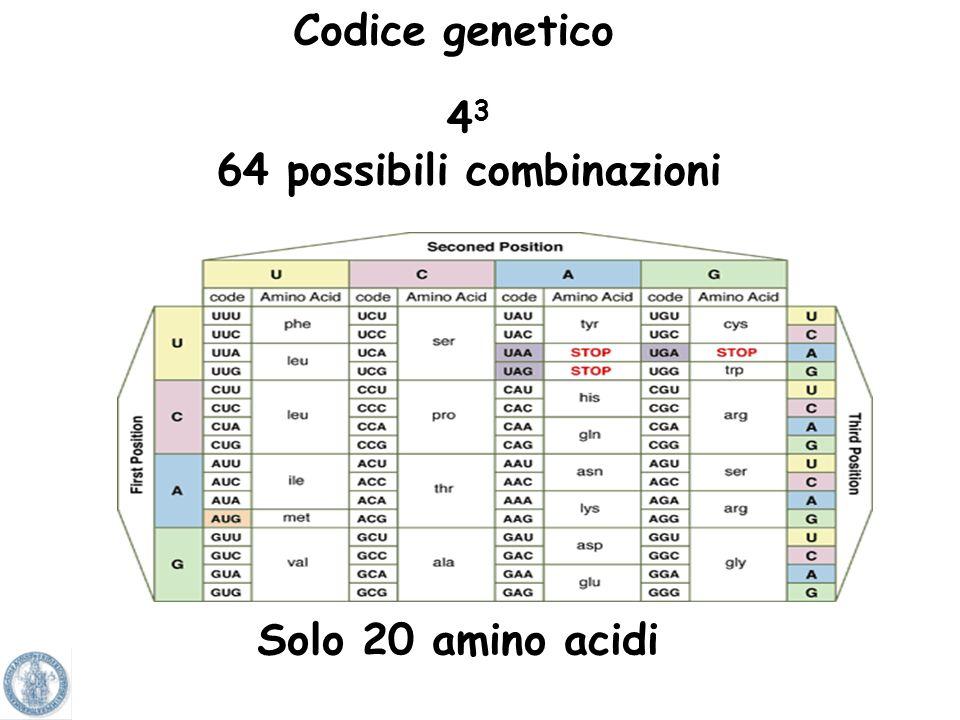 64 possibili combinazioni