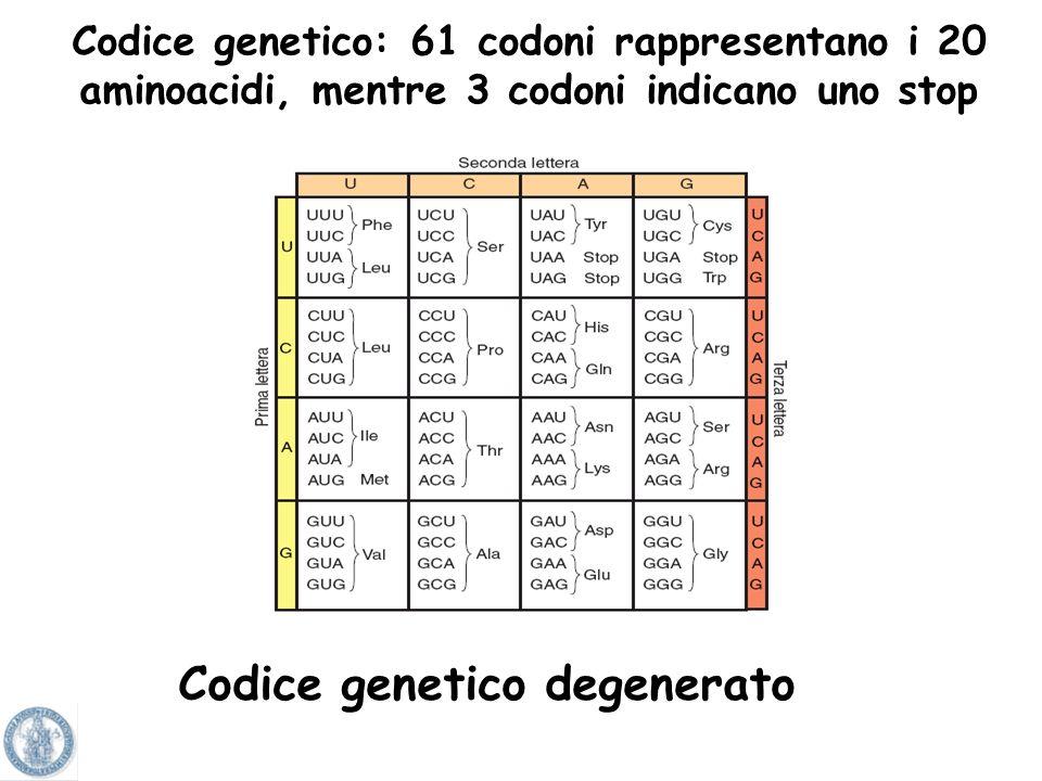 Codice genetico degenerato
