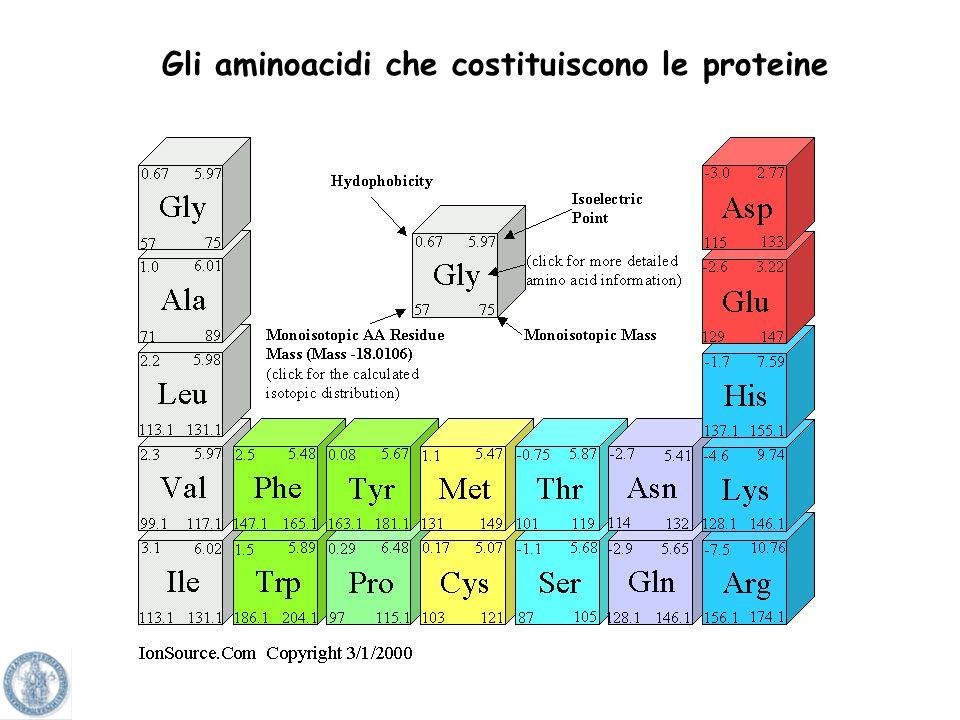 Gli aminoacidi che costituiscono le proteine