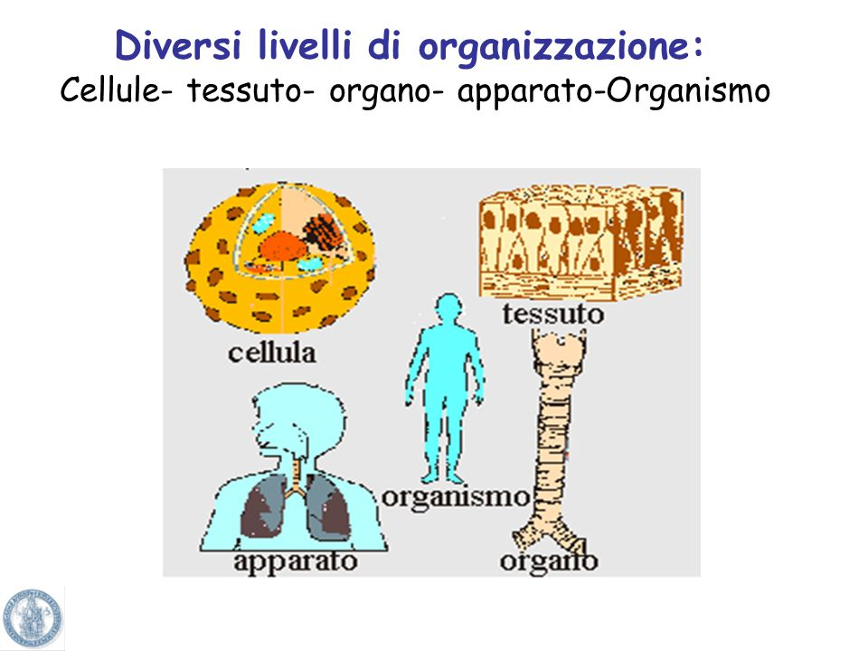 Diversi livelli di organizzazione: