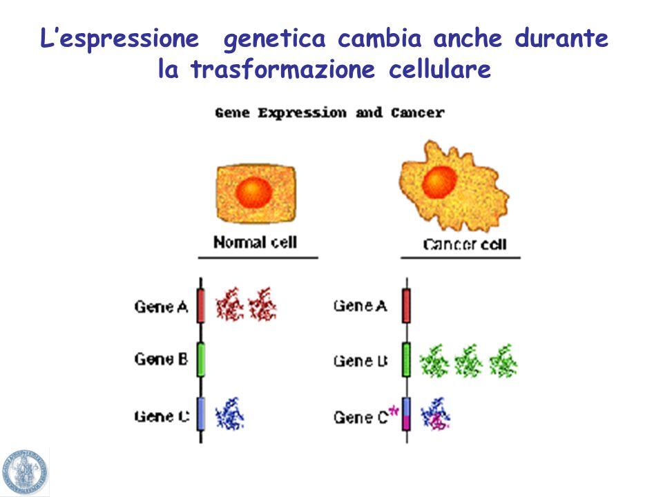 L'espressione genetica cambia anche durante la trasformazione cellulare