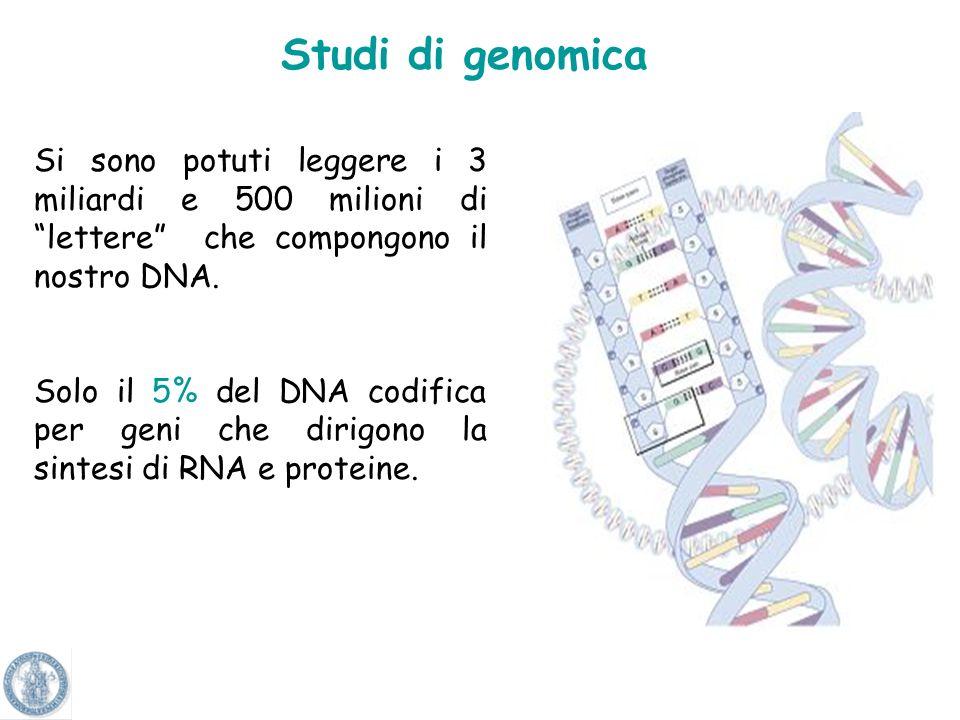 Studi di genomica Si sono potuti leggere i 3 miliardi e 500 milioni di lettere che compongono il nostro DNA.