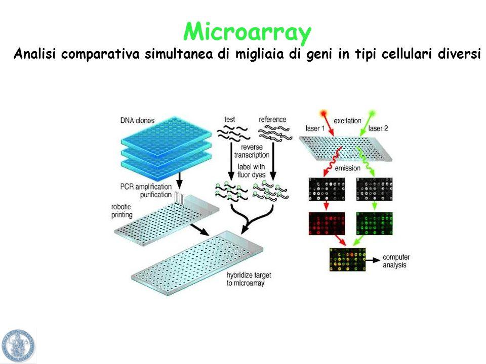 Microarray Analisi comparativa simultanea di migliaia di geni in tipi cellulari diversi