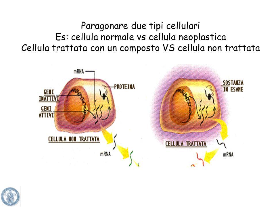 Paragonare due tipi cellulari