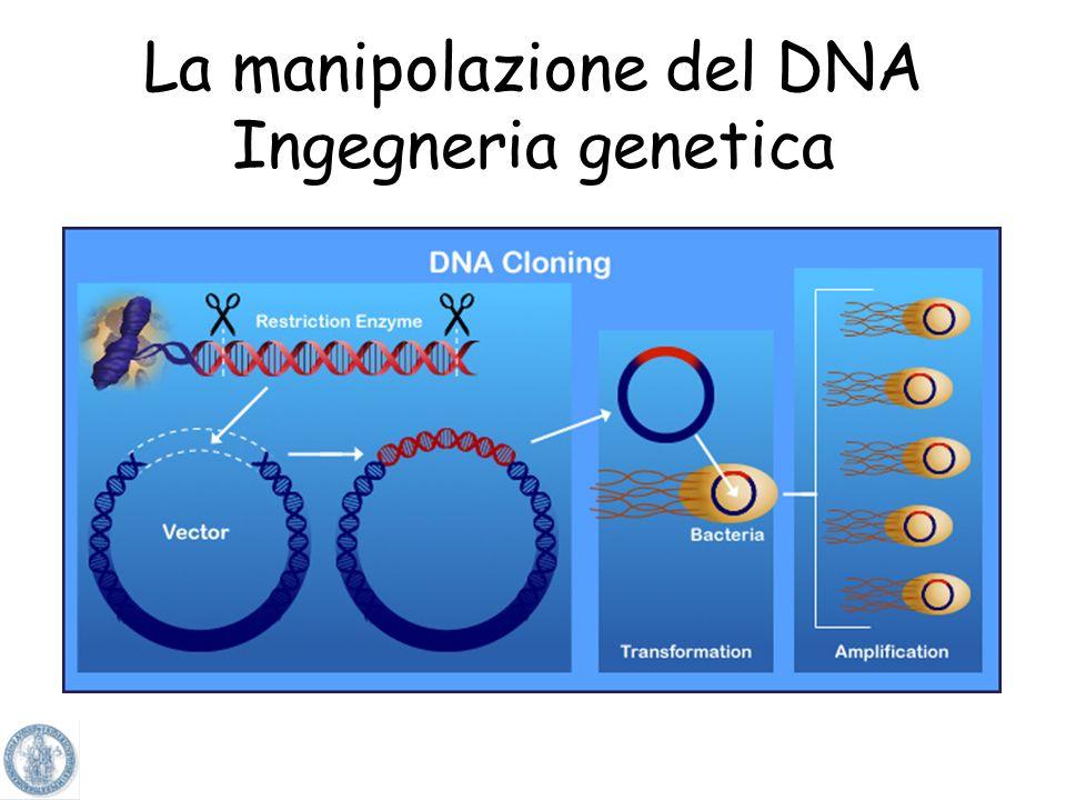 La manipolazione del DNA Ingegneria genetica