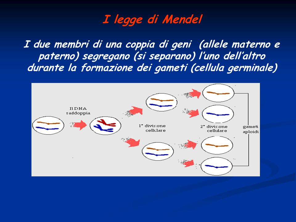 I legge di Mendel
