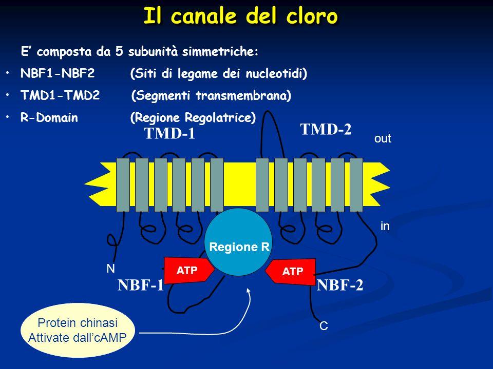 Il canale del cloro TMD-2 TMD-1 NBF-1 NBF-2