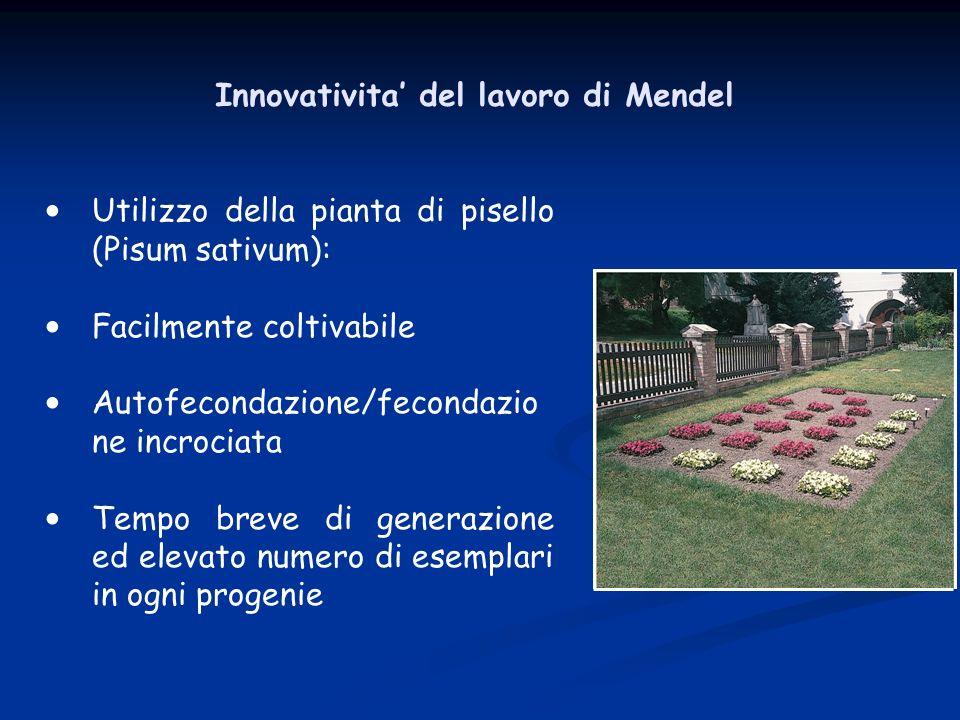 Innovativita' del lavoro di Mendel