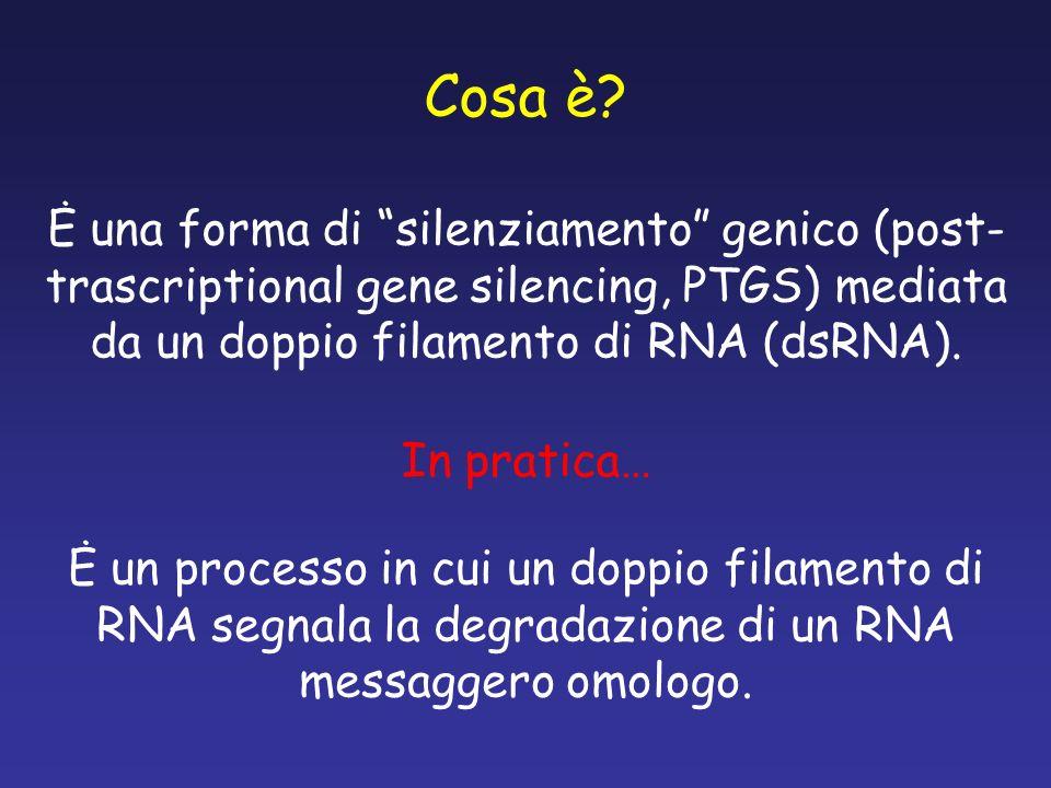 Cosa è Ė una forma di silenziamento genico (post-trascriptional gene silencing, PTGS) mediata da un doppio filamento di RNA (dsRNA).