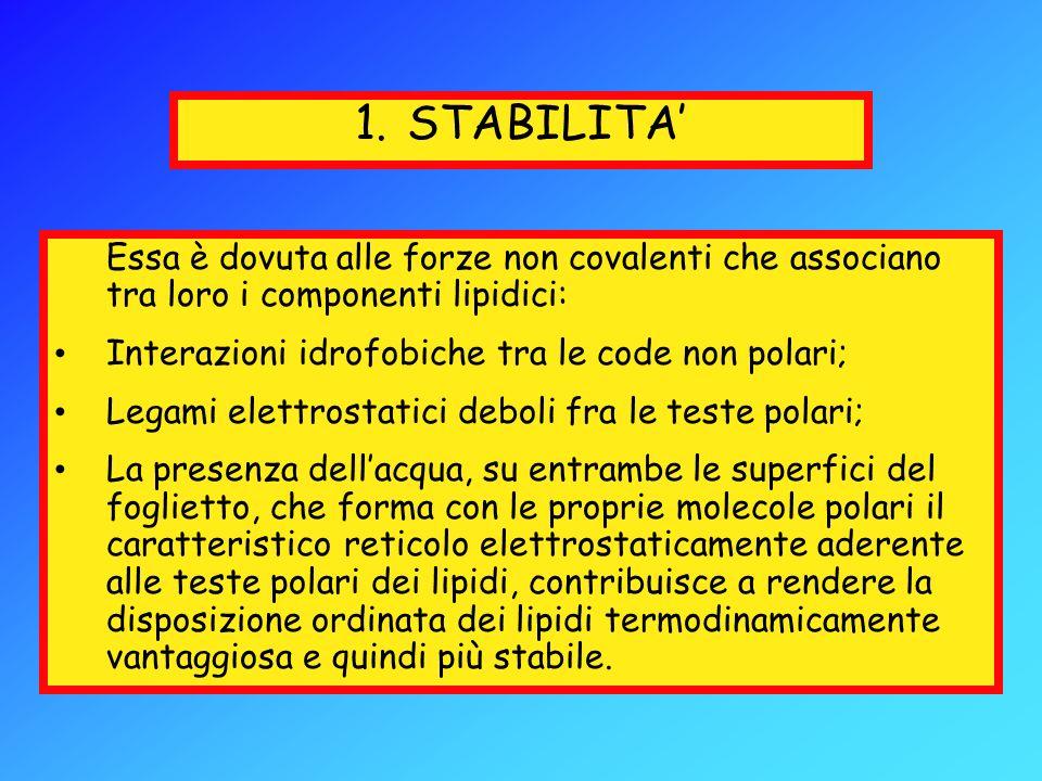 STABILITA'Essa è dovuta alle forze non covalenti che associano tra loro i componenti lipidici: Interazioni idrofobiche tra le code non polari;