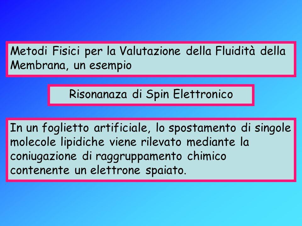 Risonanaza di Spin Elettronico