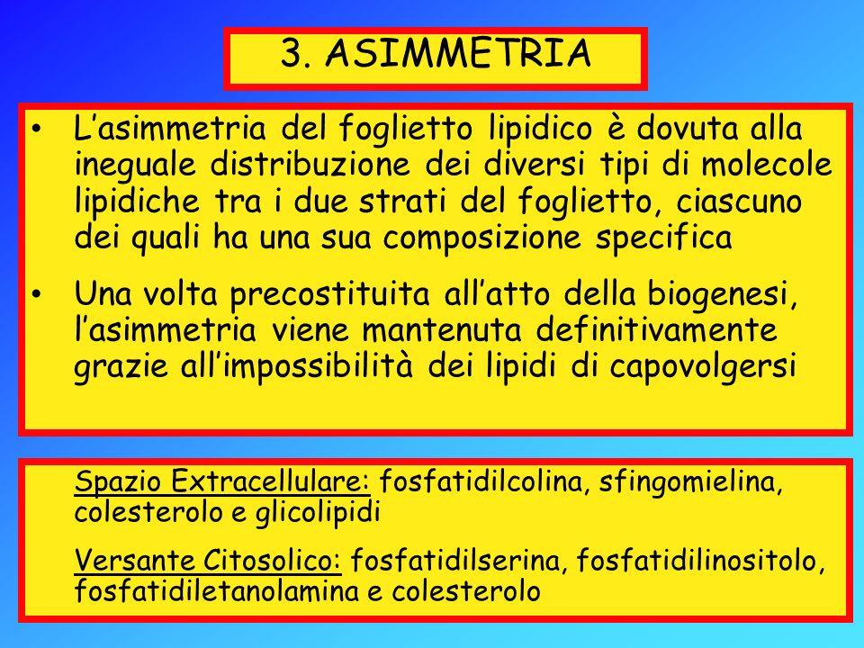 3. ASIMMETRIA