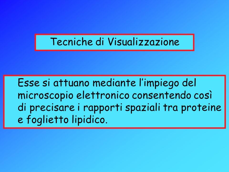 Tecniche di Visualizzazione