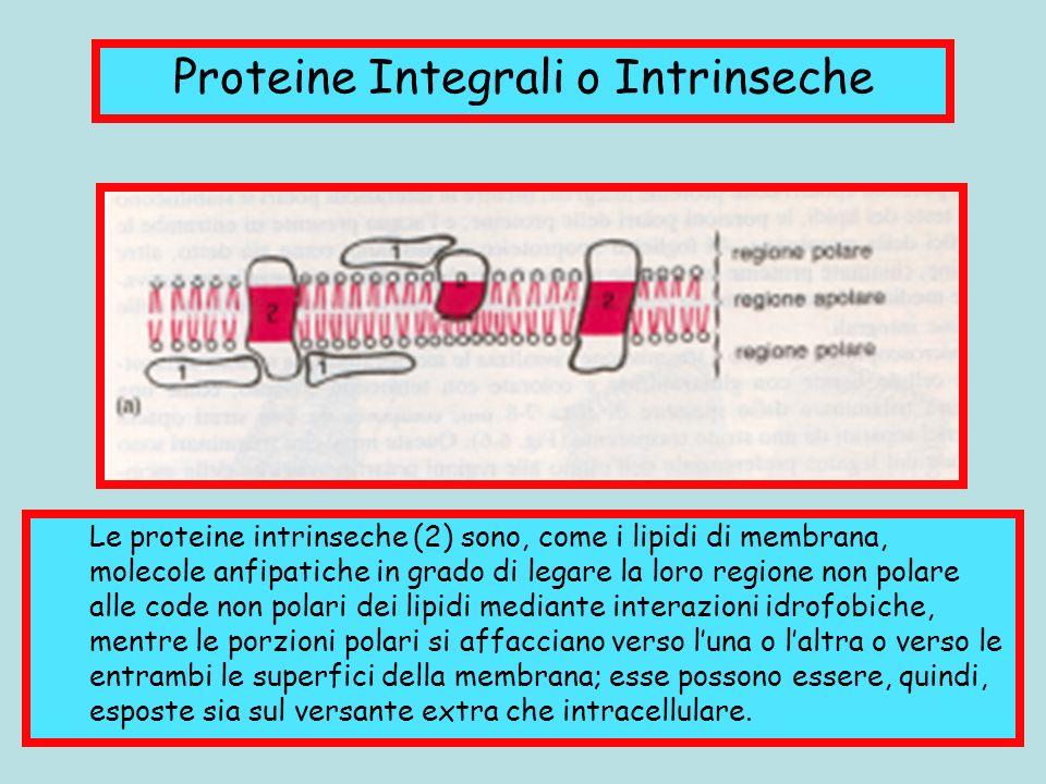 Proteine Integrali o Intrinseche