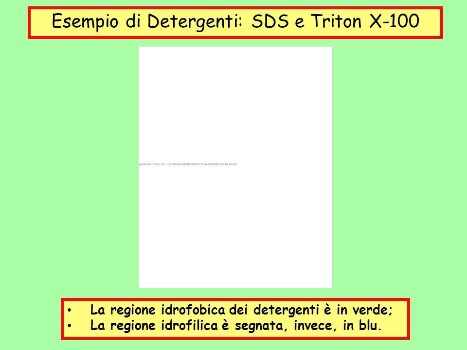 Esempio di Detergenti: SDS e Triton X-100