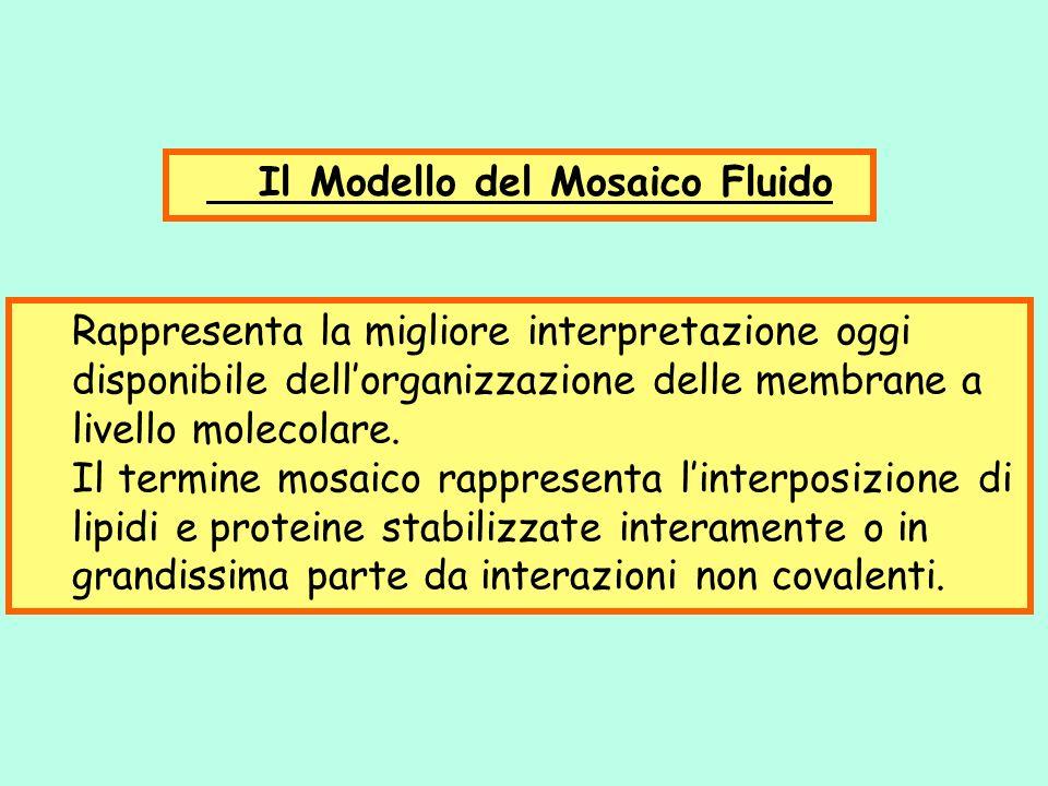 Il Modello del Mosaico Fluido