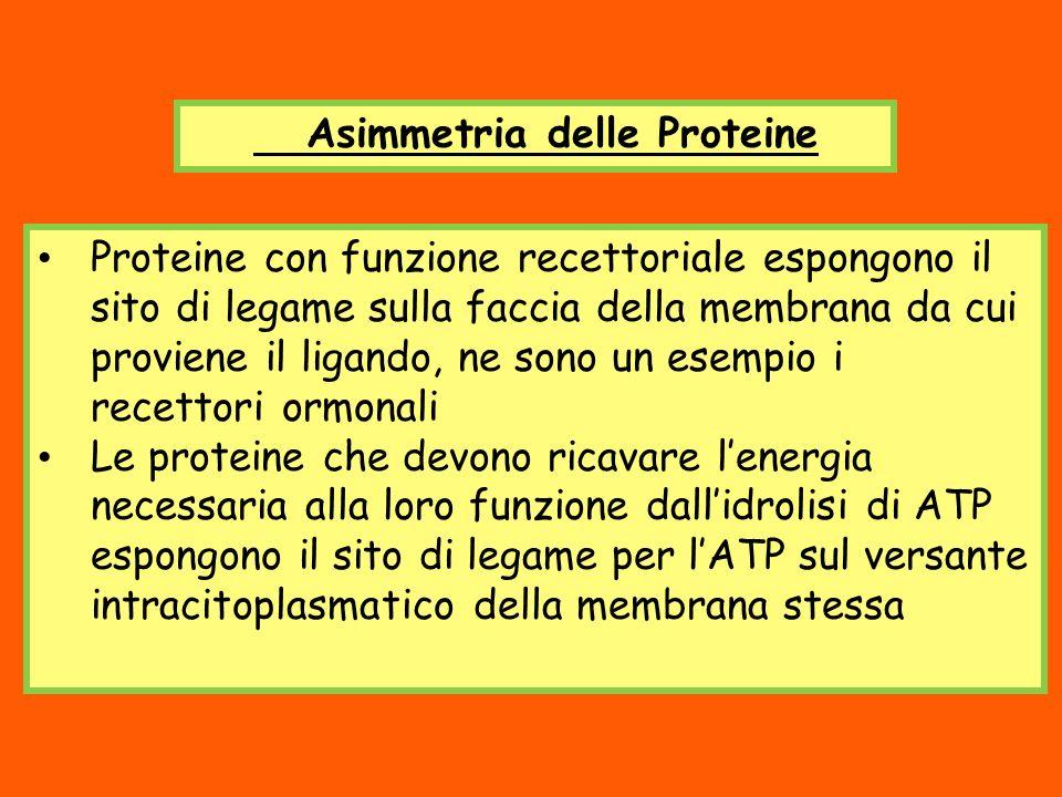 Asimmetria delle Proteine