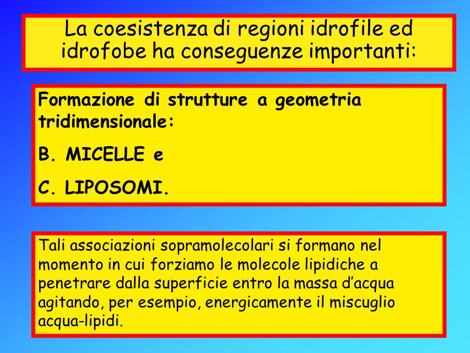 La coesistenza di regioni idrofile ed idrofobe ha conseguenze importanti: